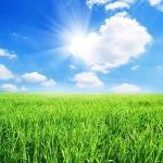 sun_grass